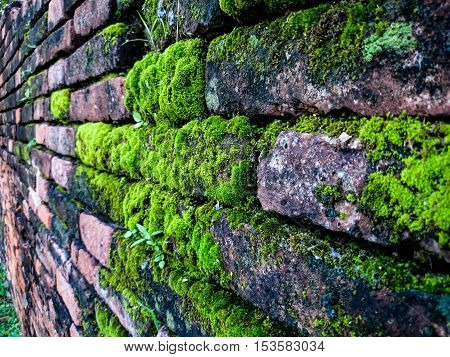 Cover green moss texture on the wall