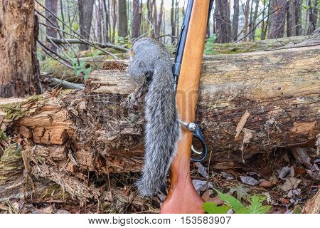 Fall Squirrel Hunting in the Appalachian Mountains