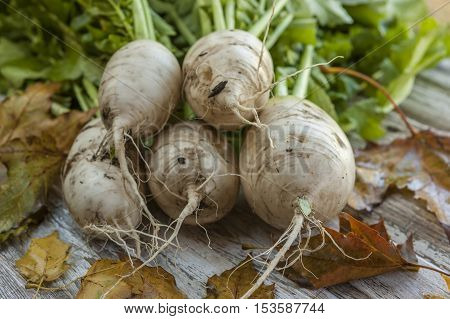 Close up of stacked chinese radishes on a table.