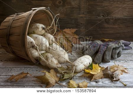 Chinese radishes in a basket on a wood table.