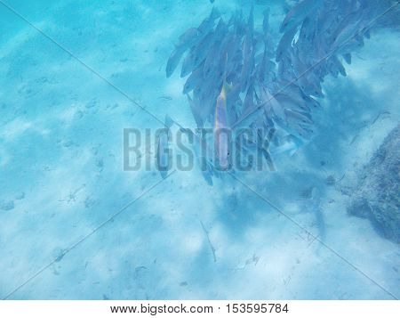 Fish In Caribbean Sea