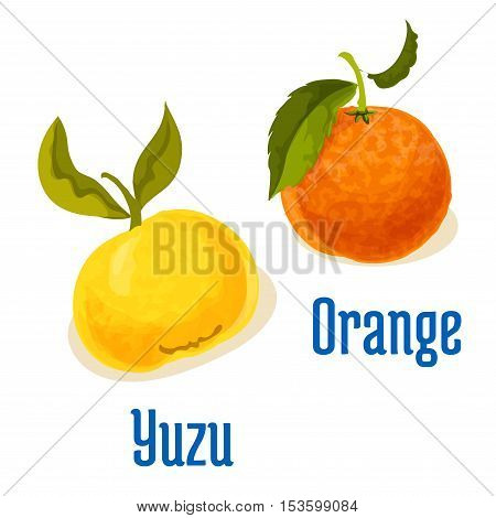 Orange and yuzu fruits vector icons. Isolated whole citrus fruit with leaves. Emblem for vitamin juice or jam label, packaging sticker, grocery shop tag, farm store