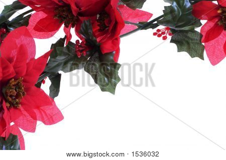 Poinsettias Background Over White