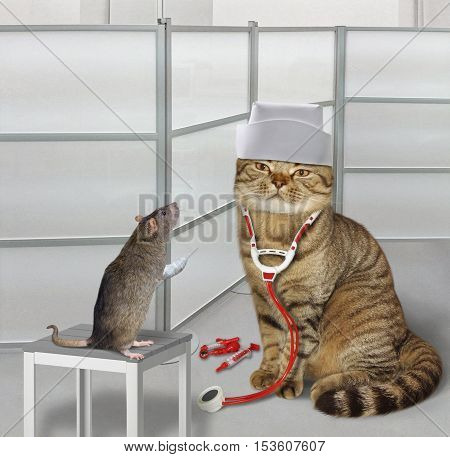 The cat vet is treating a rat in a hospital.