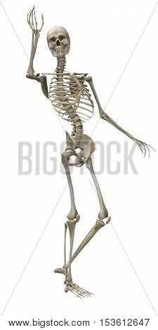 3d render of a human skeleton isolated on white background