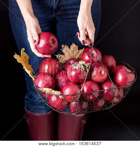 Autumn season concept. The girl in blue jeans and rubber boots (the color Marsala) holding a basket of apples.
