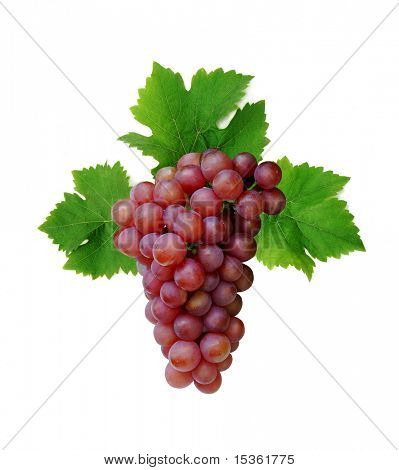 Pink grape cluster with leaves, isolated
