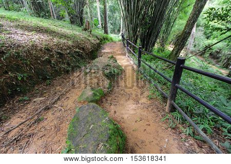 A walkway leading up a mountain in a bamboo forest