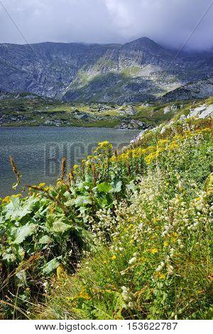 Flowers and The Trefoil lake, Rila Mountain, The Seven Rila Lakes, Bulgaria