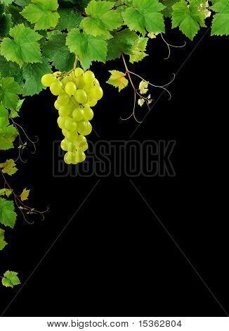 Weinrebe-Rand auf schwarzem Hintergrund