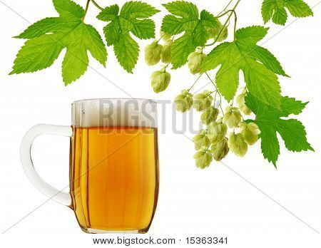 Mug of beer and fresh hops on white background
