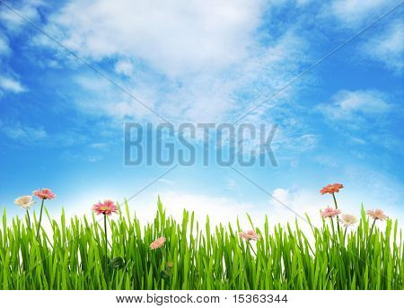 Meadow scenery with daisies and blue sky