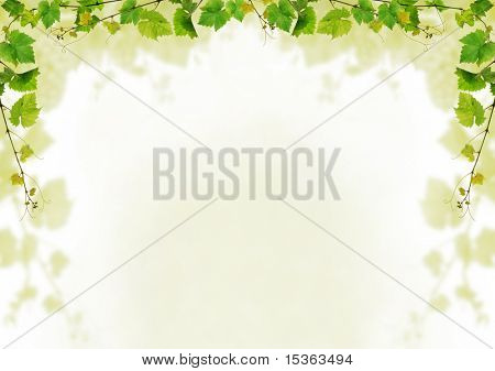 Grapevine background design