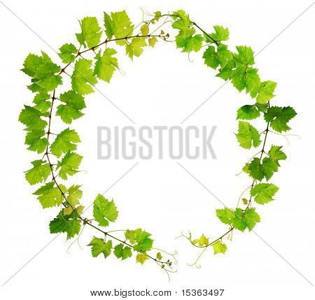 Fresh grapevine circle border on white background