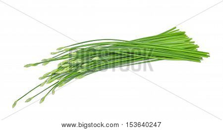 fresh chinese chives isolated on white background
