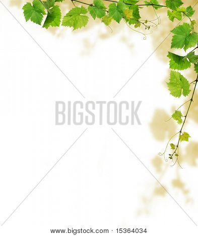 Grapevine border design, on white background