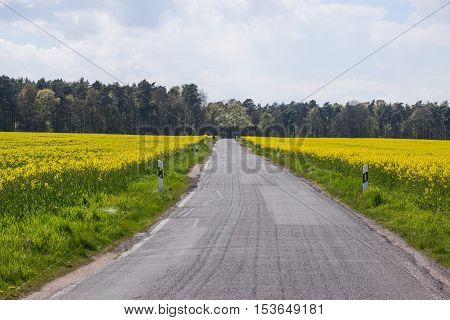 Field path between the rape fields in the spring