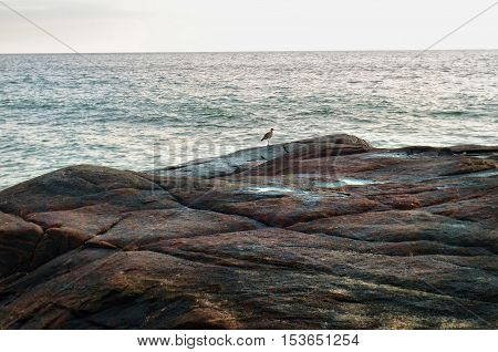 Little bird on a large stone on a background of ocean