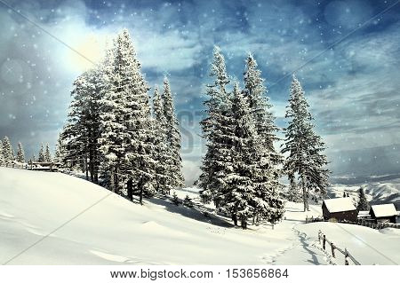 Idyllic winter landscape with snow covered fir tress. Christmas concept
