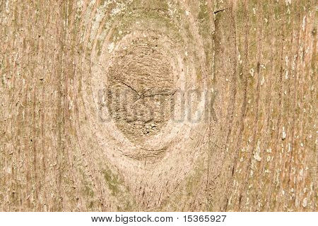Wood with bough. As texture or background.
