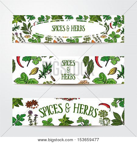 Set of three hand drawn banner templates with spices and herbs, sketch style vector illustration isolated on white background. Banner templates with realistic hand drawn herbs and spices