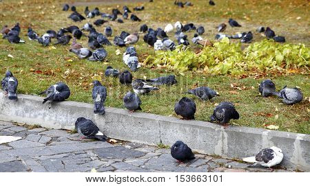 Pigeons In The City Park In The Morning
