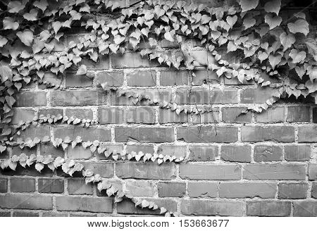 architectural and structural elements of buildings, streets, urban infrostruktura in a natural form without processing photos for micro-stock
