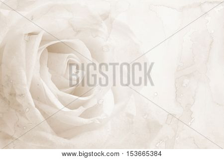 Abstract watercolor on paper texture with beautiful white rose can use as wedding background. In Sepia toned. Retro vintage style