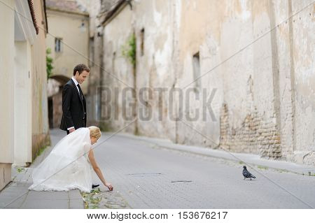 Bride And Groom Feeding A Pigeon