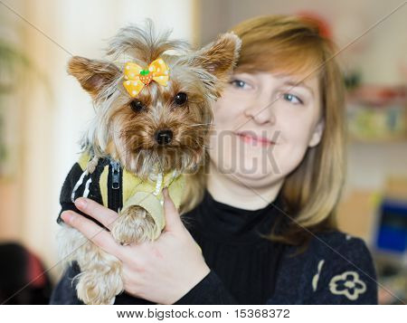 Closeup Portrait Of A Dog Yorkshire Terrier In The Arms Of Mistress