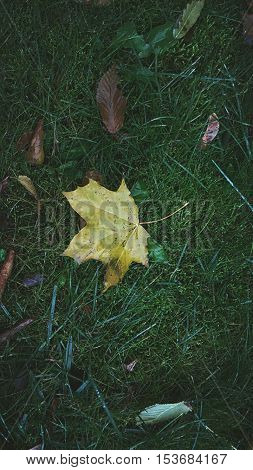 Leaves on the grass,  leaves on the grass,  autumn nature
