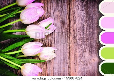 A closeup of pink and white tulips over old wood background, in a colour palette with complimentary colour swatches