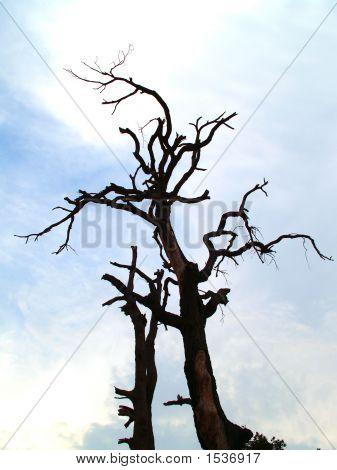 Silhouette Baum