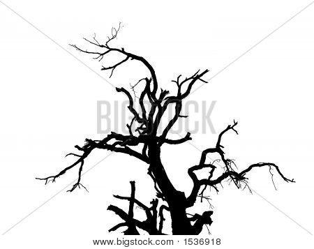 Kontur-Baum