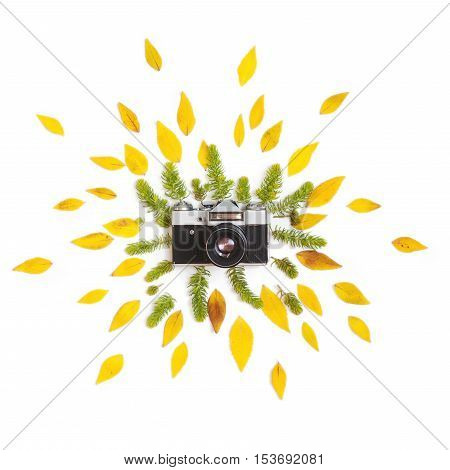 Creative arrangement of green succulents and yellow autumn leaves with vintage retro photo camera on white background. Flat lay top view.