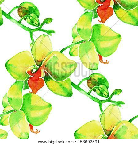 Yellow orchids. Watercolor seamless pattern with tropical flowers on white background.