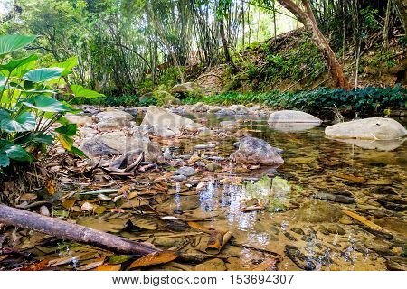 Small mountain stream with large yellow stones on the bottom. Khao Sok National Park Surat Thani Province Thailand. Selective Focus on the branch and leaves at the water in the foreground.