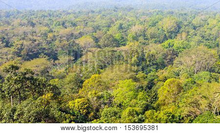 landscape of High view beautiful rainforest background