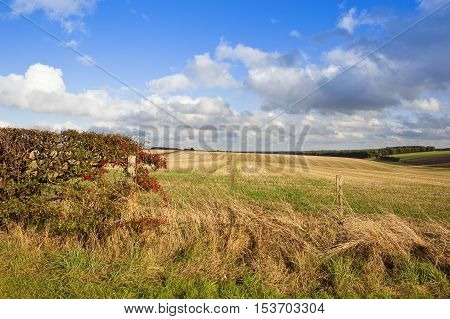Straw Stubble In Autumn