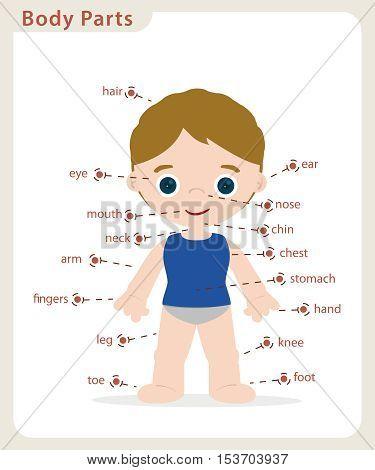 boy body parts diagrama póster for school