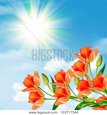 Bright and colorful spring flowers tulips. Landscape.