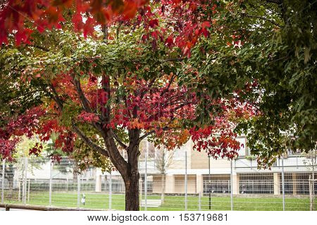 red autumn leaves and trees in the park