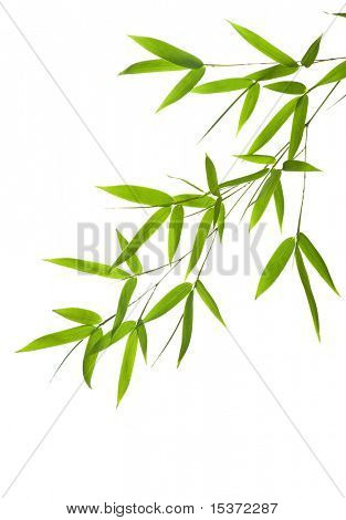 bamboo-leaves isolated on a white background.
