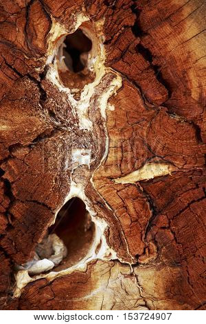 the background of a texture wood materials