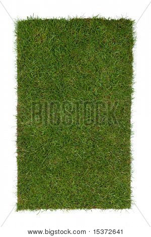 piece of grass isolated on a white background