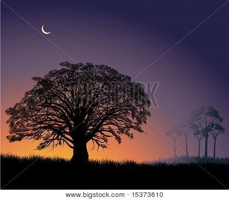 Sunrise in savanna
