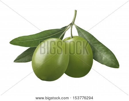 Green olives on branch isolated on white background as oil package design element