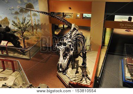 WASHINGTON DC - AUG 11, 2010: Dinosaur Skeleton in National Museum of Natural History, Washington DC, USA.