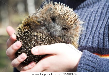 Boy With Hedgehog