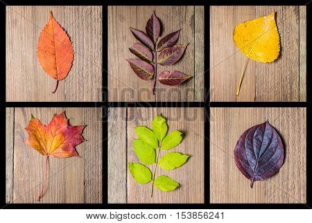 Colourful autumn leaves selection on the wooden background